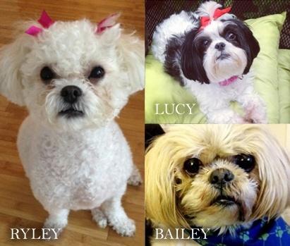 Bailey, Ryley, & Lucy