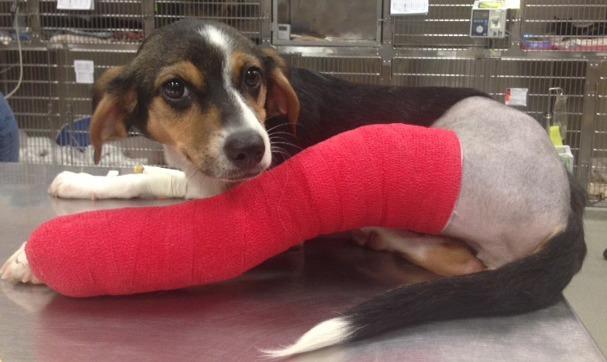 Paws Of Promise Recipient Sophie