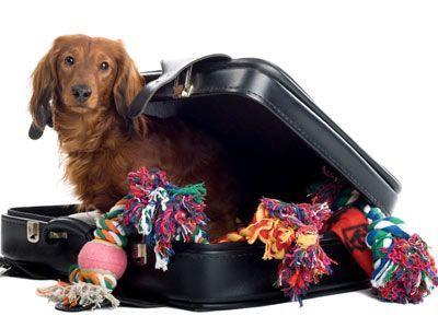 Pet Shipping 3