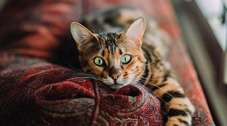 Feline Kidney Disease Metropolitan Veterinary Associates